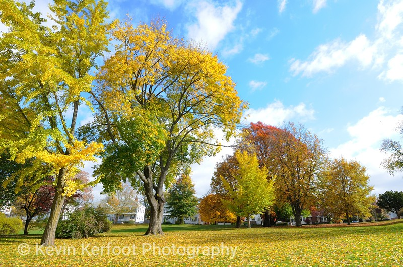 CCBA_Autumn_20091029_642_nxpp2_ppss_reduced