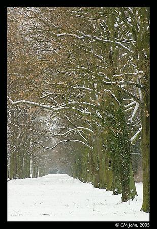 <H2><b>Alley of trees at Sanssouci</b></H2> <P ALIGN=LEFT>Winter scene at the Soussouci park of Potsdam. Sanssouci was the summer palace of the prussian kings.<P>