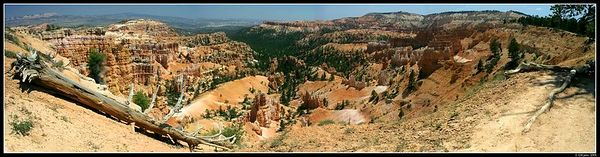 <H2><b>180 degrees view on Bryce Canyon</b></H2> <P ALIGN=LEFT>This picture is a composite of four different shots stiched together. It gives you a 180 degree view of the canyon, as if you were there. Best viewed in large format!</P> <H5>(Click on picture to enlarge)</H5>