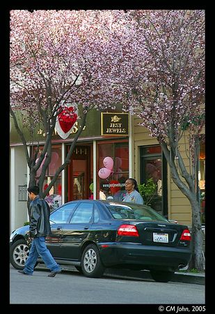 <br> <H2><b>Blooming cherry trees</b></H2> <P ALIGN=LEFT>Cherry trees on Union Street, adorning Valentine's Day with their delicate colors.<P> <H5>(Click on picture to enlarge)</H5>
