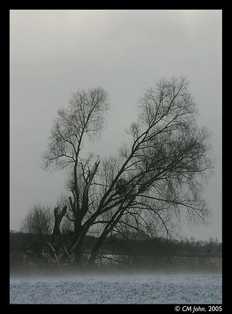 "<H2><b>Tree and snow</b></H2> <P ALIGN=LEFT>Naked tree in the winter, close to the Fahrländersee (""lac of Fahrland""), Germany.<P>"
