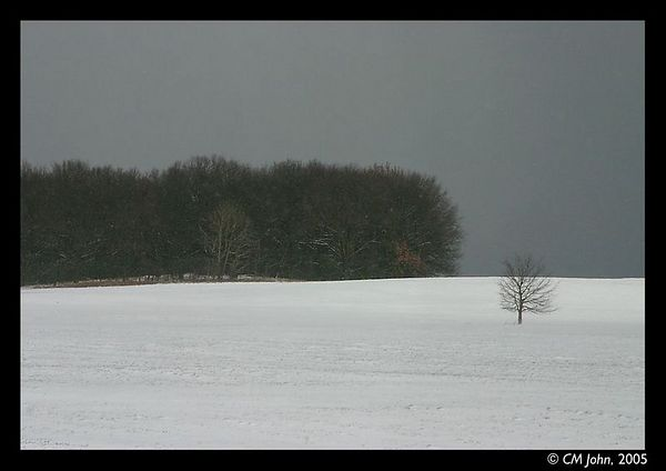 <H2><b>Lone tree</b></H2> <P ALIGN=LEFT>Winter landscape around Fahrland, Brandenburg (Germany). A tree is isolated in the field during a snowstorm.<P>