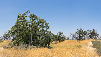 Hilltop of California Oaks
