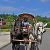 Denali Alaska 384, horses & wagon
