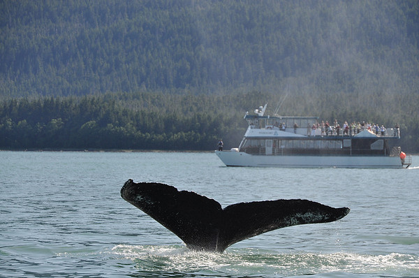 Juneau Alaska 366, whalewatching