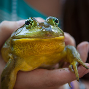 20130704_frogs-9783