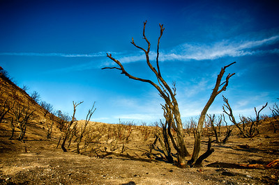 Vista of Charred Trees