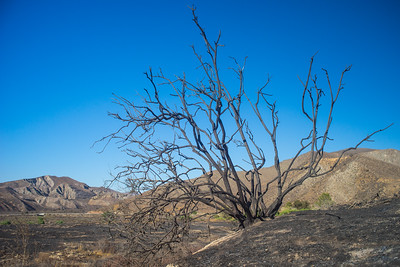 Burned Tree on Hill