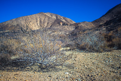 Brush in Rocky Desert