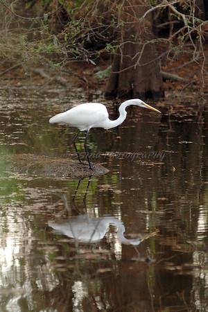 Wildlife in Louisiana