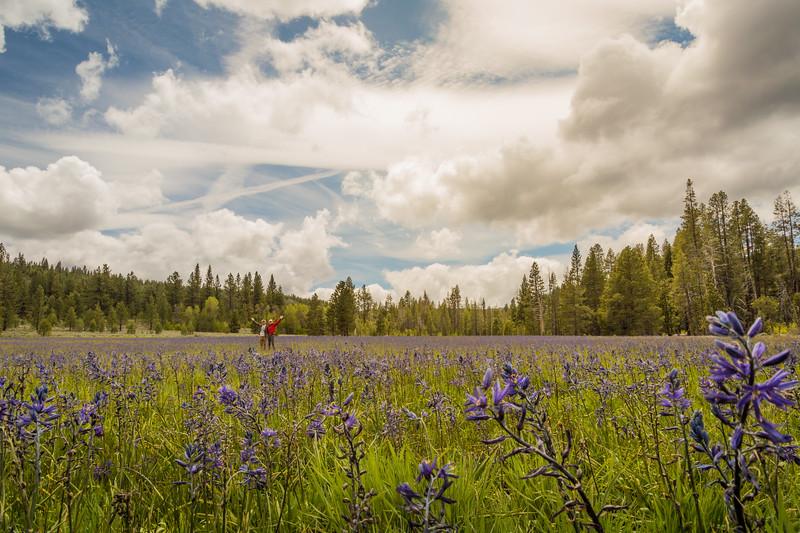 Sagehen Creek wildflowers hikers