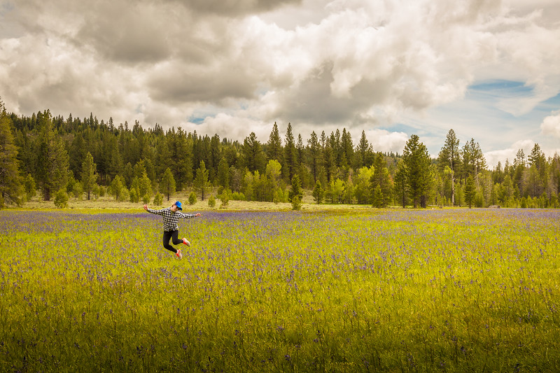 Happiness jump at Sagehen Creek wildflowers