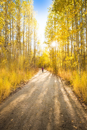 Fall aspens along Lake Tahoe path