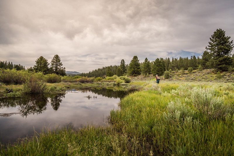 Little Truckee River Flyfishing