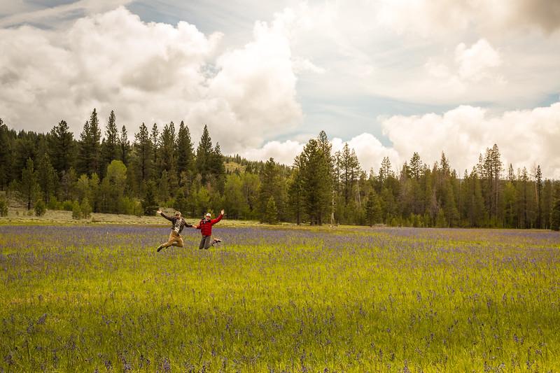 Joy at Sagehen Creek wildflowers