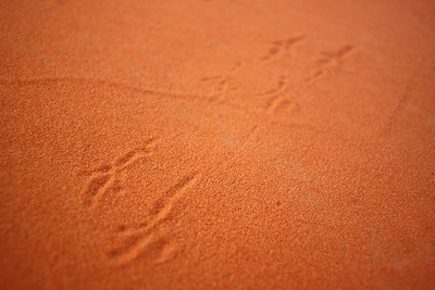 tracks in red sand