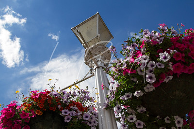 Marlow Hanging Baskets