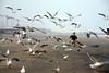 Young boy chasing sea gulls on beach