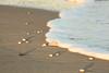 Surf kissing shells