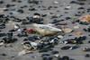 Sea Shells on New Jersey beach