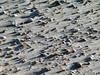 Sea Shells on Tybee Island Beach