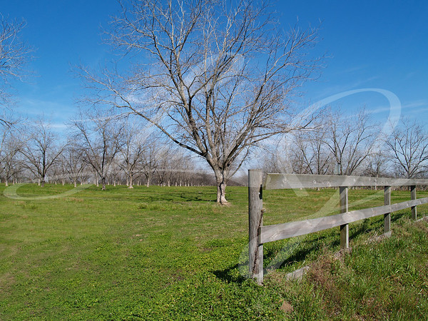 Board fence beside a pecan grove in Thomas County, south Georgia during the winter.