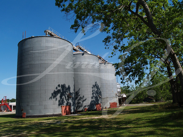 Three large grain silos beside a mature pecan grove in south Georgia.