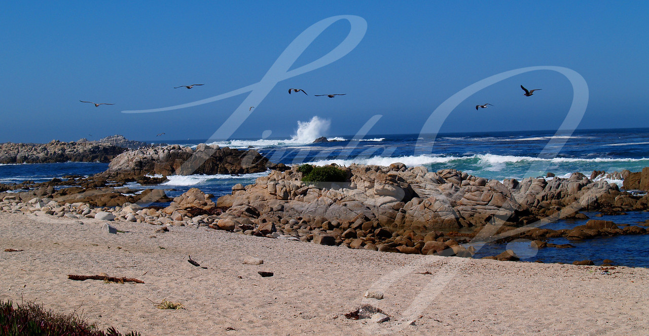 Splash Panorama--A large wave splashing with sea gulls flying overhead in a beautiful clear blue sky along a rocky sandy coast south of Santa Barbara, California