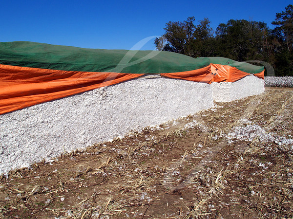 Cotton Modules with a cotton field in the background.