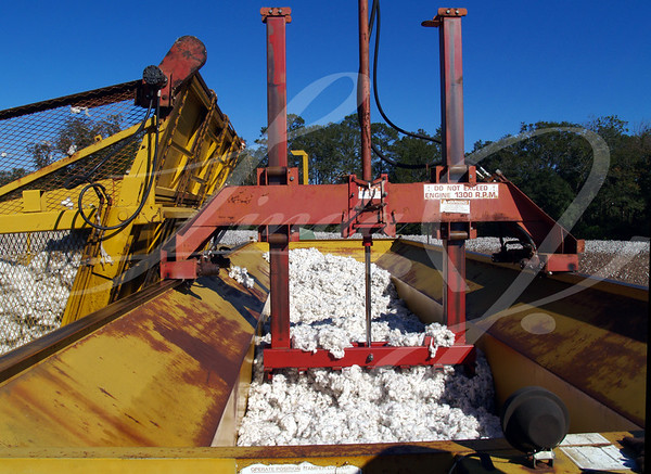 A cotton module builder being packed down