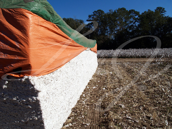 Cotton Module with a cotton field in the background.