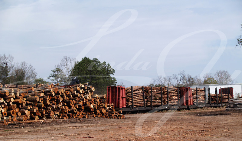 Stack of cut trees waiting to be loaded beside a loaded flatcar.