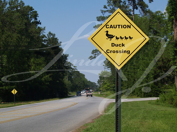 Yellow diamond caution duck crossing sign beside a road.