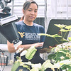 Jenn Nyugen, Bramblebee the robot and teammates test their robotic pollinator at the Davis College Greenhouse May 6th, 2019.  Photo Brian Persinger