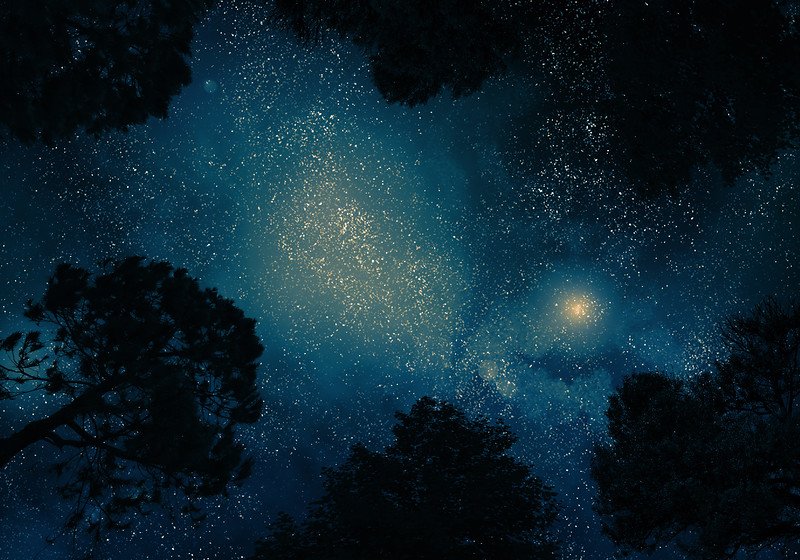Starry sky through trees