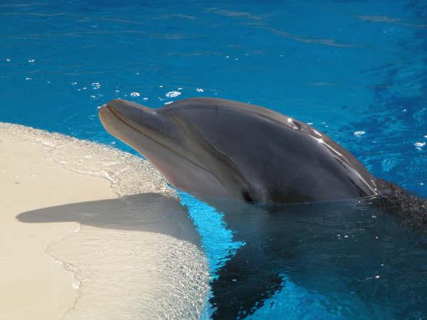 Mirage Hotel dolphin 2