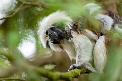 tamarin family with small baby