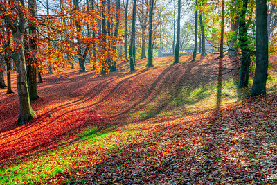 Autumn in park, fall concept