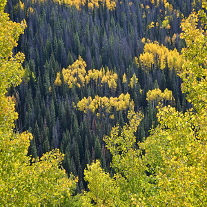 Autumn - Routt National Forest - Colorado