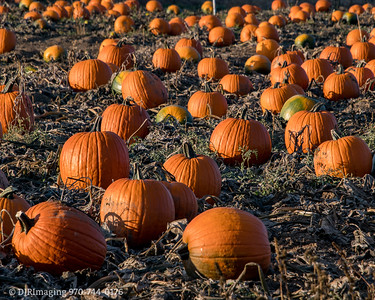 Autumn Scene - Loveland Colorado - 2017