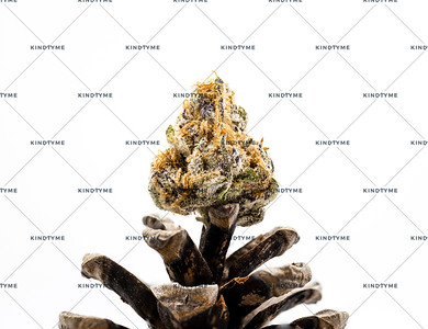 Jelly Sickle Cannabis Flower on Pine Cone