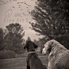 """Bird Dog in Training""<br /> <br /> *  Photograph of the Year 2012 - MVPC Print<br /> *  Best of Show - April 2012 - 9th Annual Monticello Photo Show (B/W)<br /> *  Best of Show - April 2012 - MVPC <br /> *  1st Place - April 2012 - MVPC Print<br /> *  Merit - March 2012 - N4C"