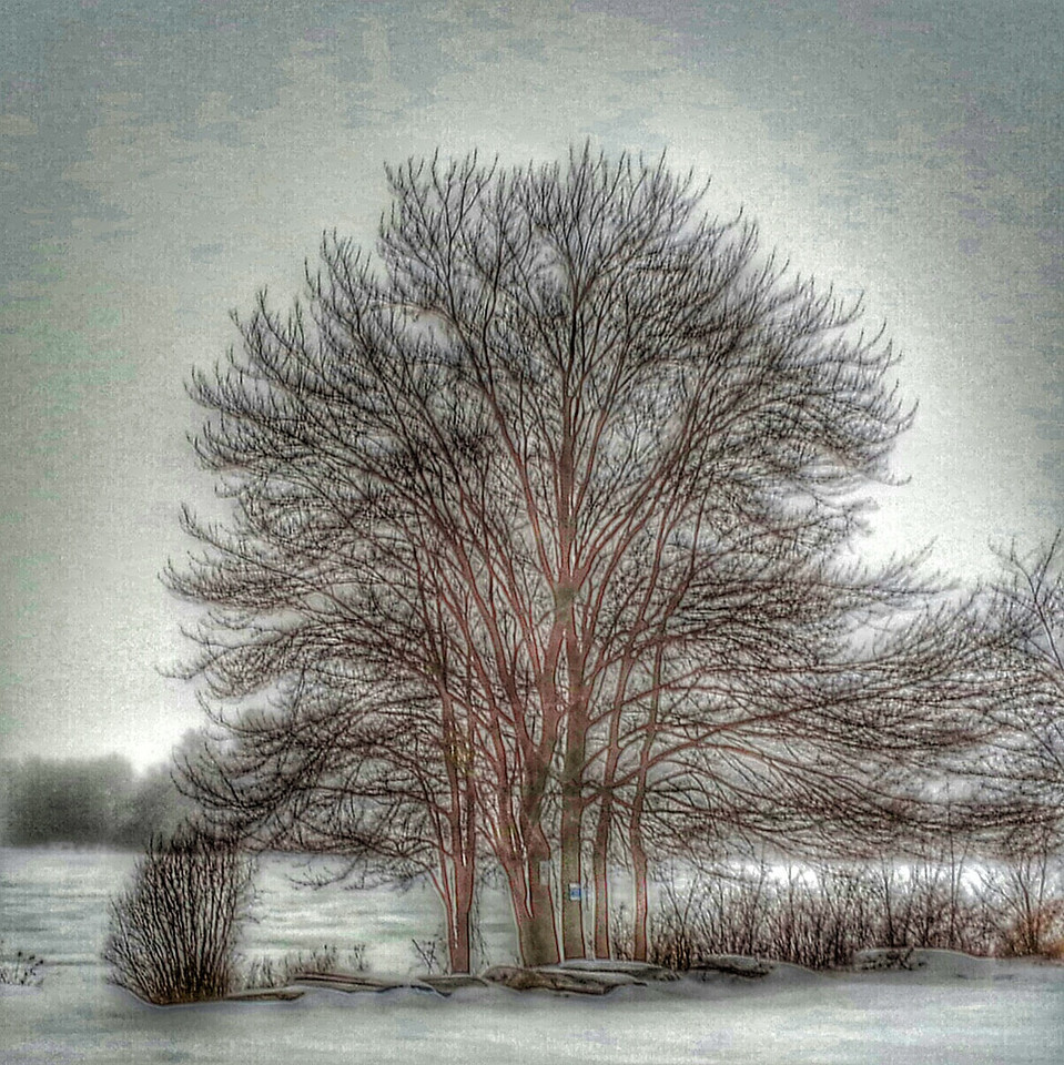 Tree at Lake Gleneida Carmel,  N.Y. winter 2014