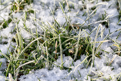 Closeup of frozen crystals on grass blades with snow