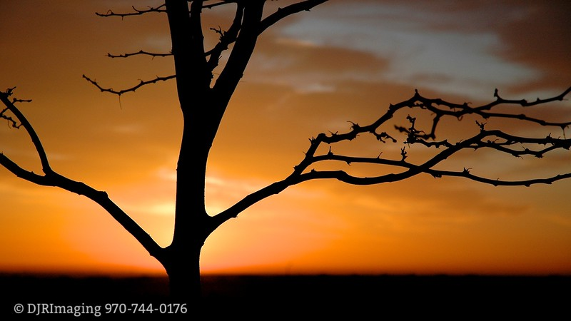 DJRI_copyright_2008-04-19@06-18-01