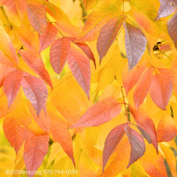 DJRI_copyright_2015-10-26@11-40-30