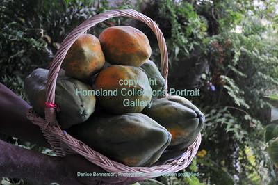 0001 St Croix Papayas