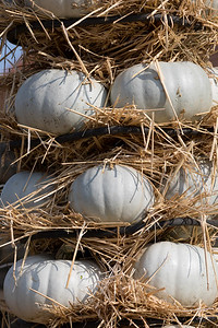 Ripe autumn pumpkins arranged on totem