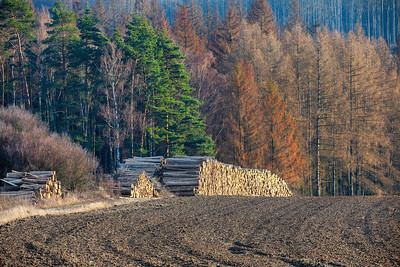 Piled logs of harvested wood