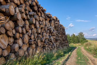 Piled logs of harvested wood in forest